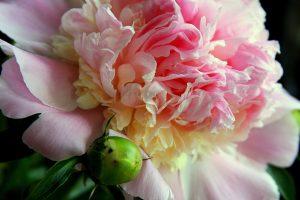 organisk blomst