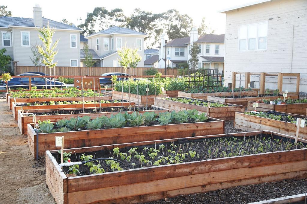 Sådan bygger du et højbed til din grøntsagshave DEL 1